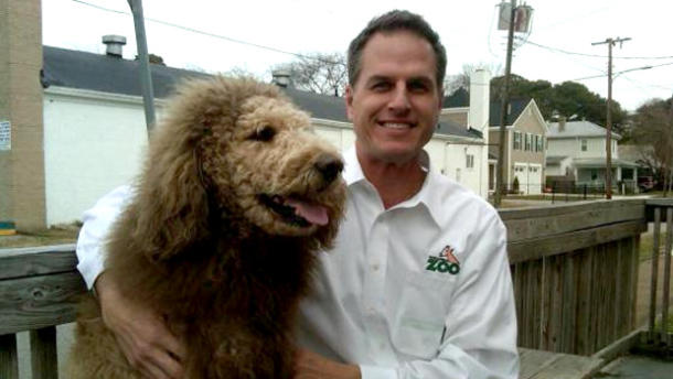 This poodle is not a lion!
